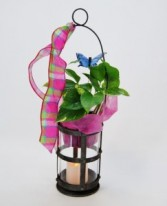 Glowing Praise Decorated Plant & Lantern
