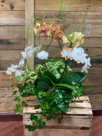 Gold celebration orchids Dish garden