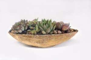 Gold  Succulent Garden   in Falls Church, VA | Geno's Flowers