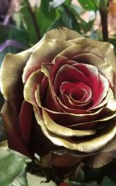 Gold with red inside rose ROSE 1 DOZEN
