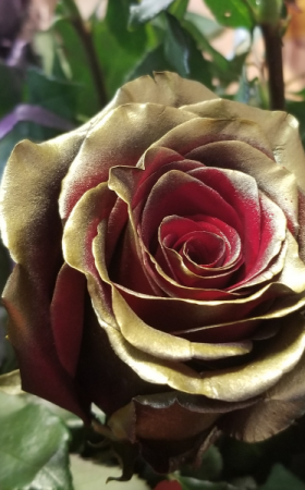 Gold with red inside rose ROSE 1 DOZEN in Fairfield, CA | TERESITA FLORAL CREATIONS