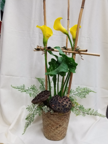 Golden Calla Lily Plant Blooming plant arranged