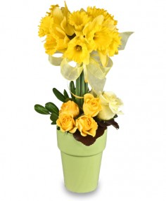 Golden Garden Topiary  * availability may be limited