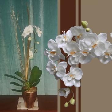 Golden Orchid Plant