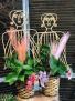Golden Pothos Trellis Lady Plant
