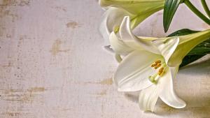 Good Friday & Easter   in Calgary, AB   Petals 'N Blooms