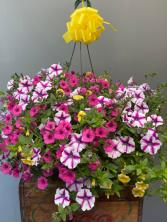 "Gorgeous 10"" Hanging Baskets"