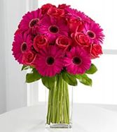 Gorgeous Gerber Daisies Valentine Flower Delivery In Washington DC