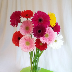 Gorgeous Gerbera Wrapped Stems in Norway, ME | Green Gardens Florist & Gift Shop