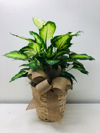 Gorgeous Green Plant  Green Plant