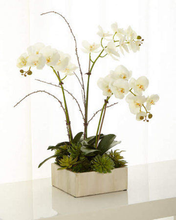 Gorgeous Orchids Planter Live Blooming Plant