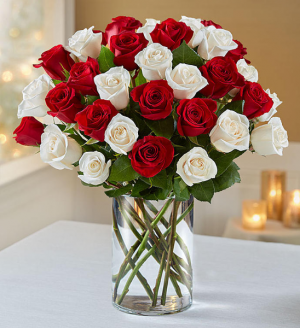 Gorgeous Red and White Roses  in Coral Gables, FL | FLOWERS AT THE GABLES