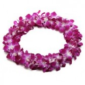 HAWAIIAN ORCHID LEIS CELEBRATION