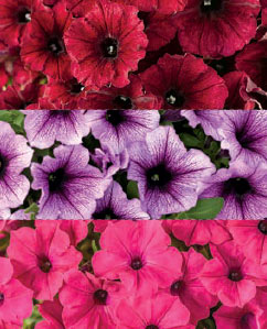 "Grand Traverse combination Available  a 10"" hanger, 12"" Patio pot & 6.5"" Foolproof color"