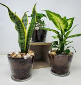 Grateful Green Plant