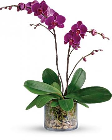 Gratitude Orchid