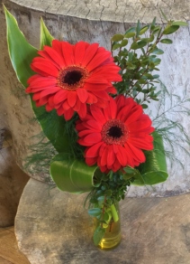Great Gerberas