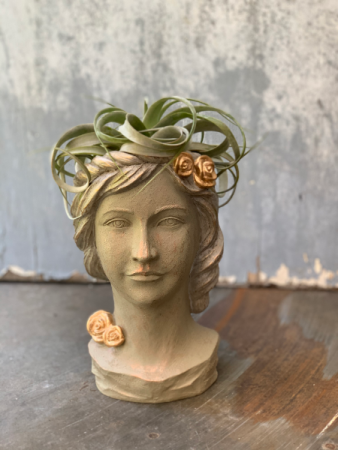 Greek Goddess With Xerographica Air plant Plant