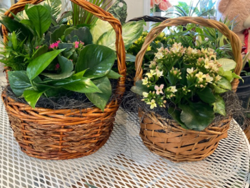 Green and blooming plants in a basket.