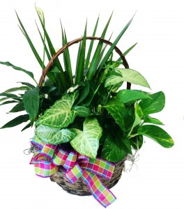 Green Basket  3C Floral Collection