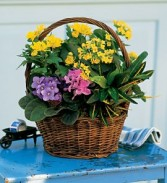 Green & Blooming Basket