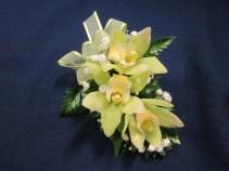 Green Cymbidium Orchid,  $25.00