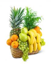 Green Goodness Fruit & Plant Basket Gift Basket