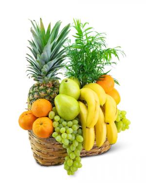 Green Goodness Fruit & Plant Basket Gift Basket in Nevada, IA | Flower Bed