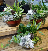 Green Green Christmas Planter