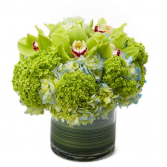 A Beautiful day !  White  Hydrangeas  green hydrangeas cymbidium orchid pink or green