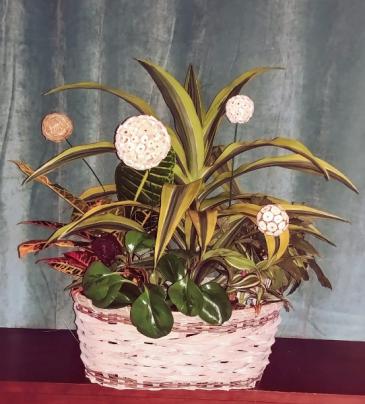 Green Jungle Planter