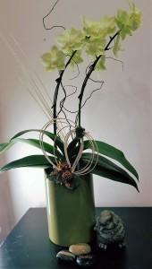 Green Orchid arrangement  plants