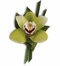 Green Orchid Boutonniere Fresh Arrangement