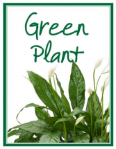 Green Plant  Designer's Choice