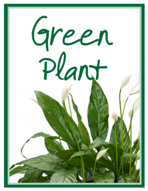 Green Plant Deal of the Day  in Kirtland, OH   Kirtland Flower Barn
