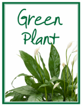 Green Plant Deal of the Day Arrangement
