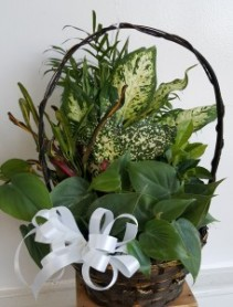 GREEN PLANT FLOWERS