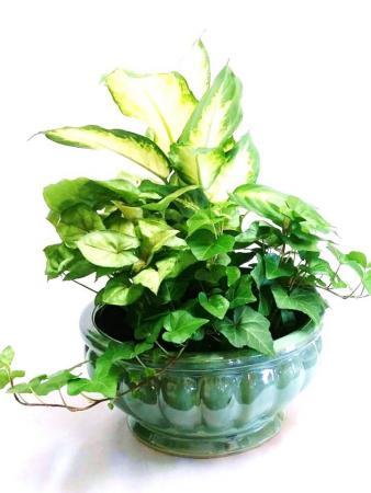 Green Plant Garden in Ceramic Dish Garden