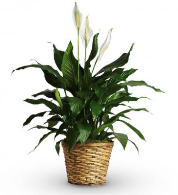 Green Plant Green Plant