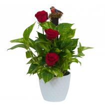 Green Plant in Ceramic with Fresh Roses Plant