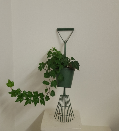 Green rake wall hanging with real ivy Planter
