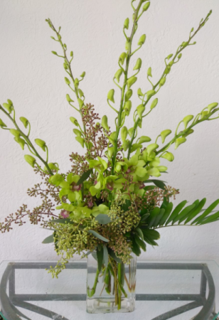 Serene Green Orchids