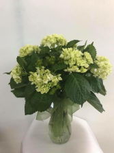Green splendor Vase arrangement