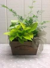 Green Wood Planter Decorative Planter Box