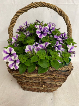 Greenhouse Planter Potted Annuals