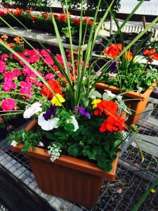 Greenhouse Planters available during the months May-July