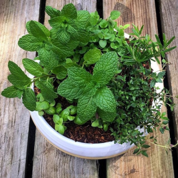 Malachite Garden Herbal Planter