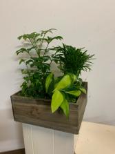 Grey box  planter