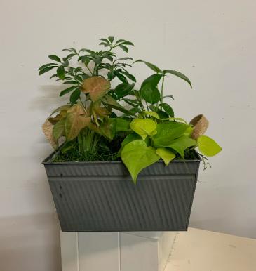 Grey metal box planter