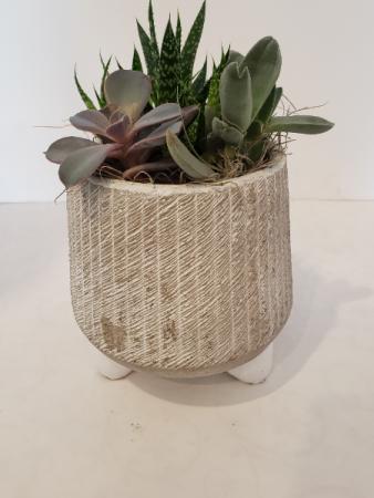 grey textured pot of Succulents Planter